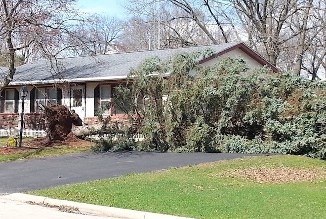 High winds topple tree